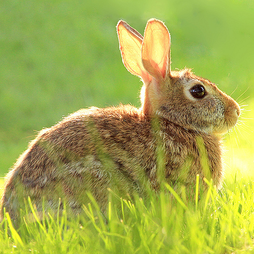 40 Adorable Bunny Pictures