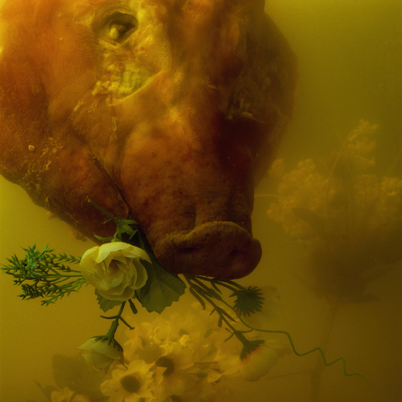 Bobby Neel Adams - Flower Pig (Drowned Series)