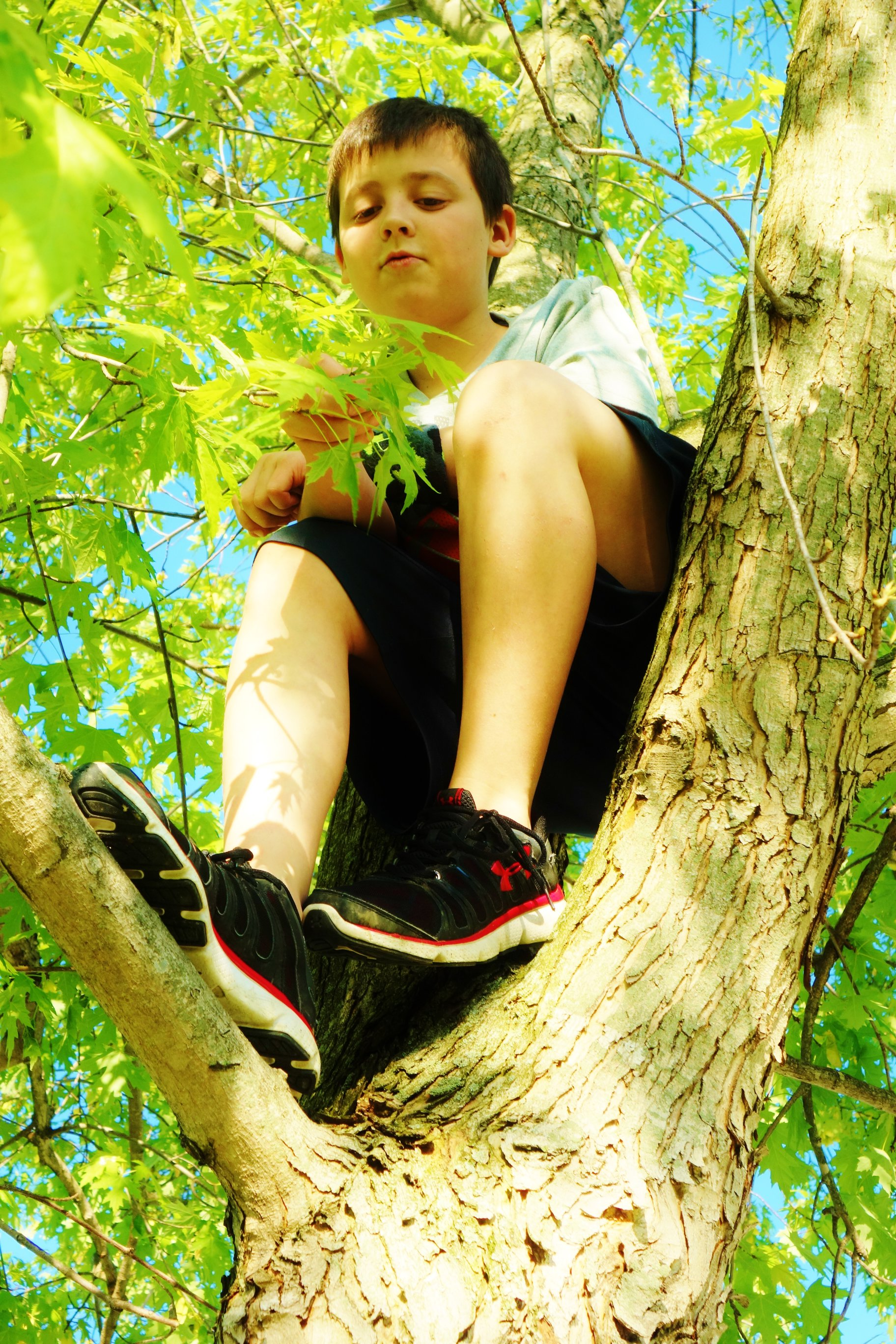 boy_in_tree