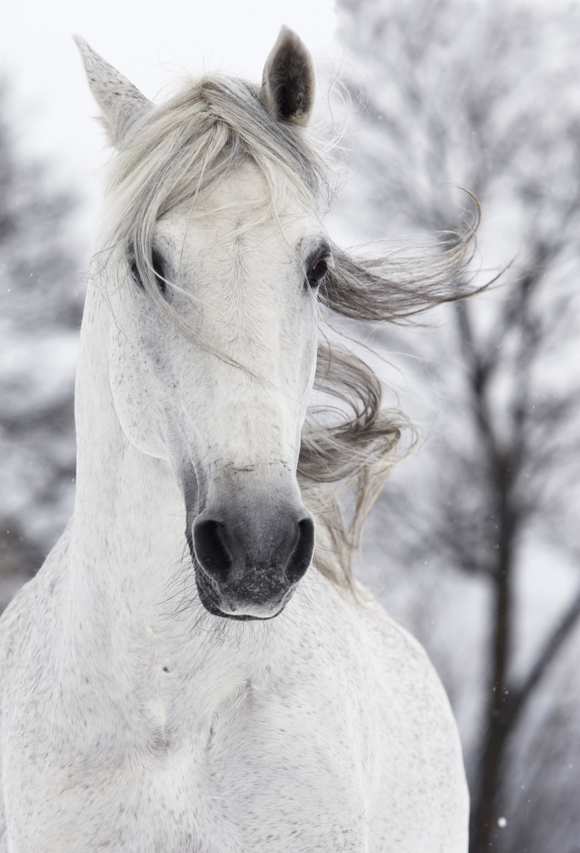 26 Beautiful Horse Pictures